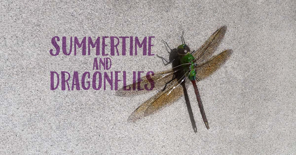 Summertime and Dragonflies